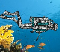 Ocean Dreams Tenerife reviews on ScubaTribe